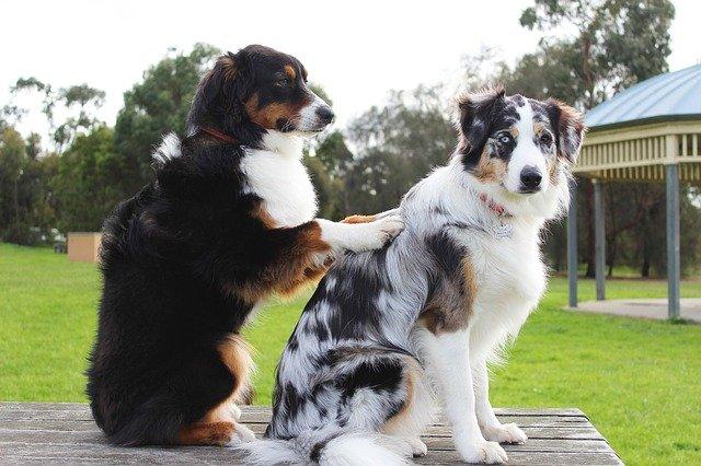 犬の背中を治療している犬
