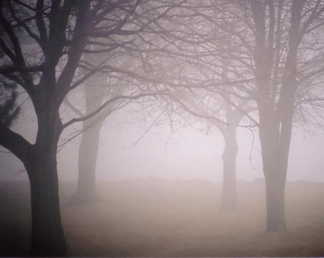 霧に包まれた怖い森