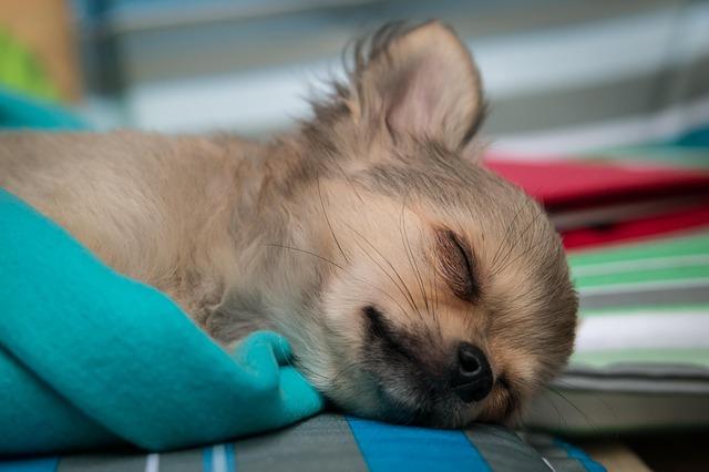 熟睡している子犬