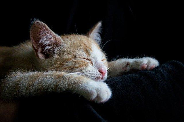 疲れて寝ている猫
