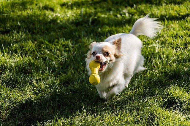 犬の走っている画像