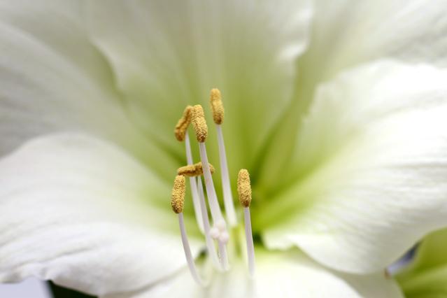 花びらの中の雄しべと雌しべ