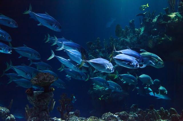 優雅に泳ぐ青魚