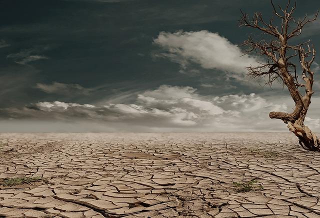 乾燥した大地と枯れた木