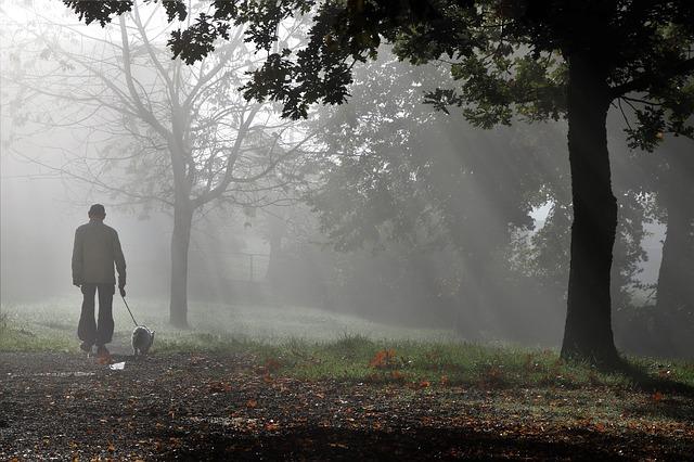 朝もやの森の中を散歩する老人と犬