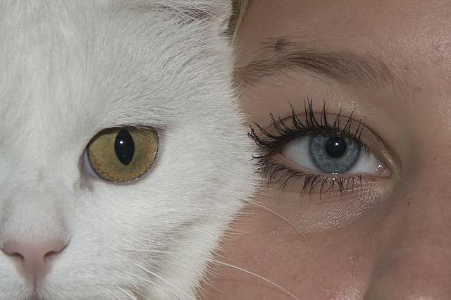 隣り合った猫と女性の目