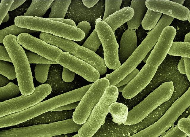 ウイルスや細菌のイメージ画像
