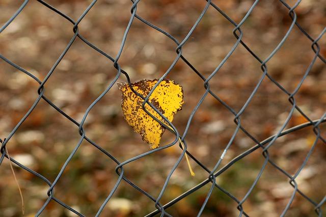 金網についた一枚の枯れ葉