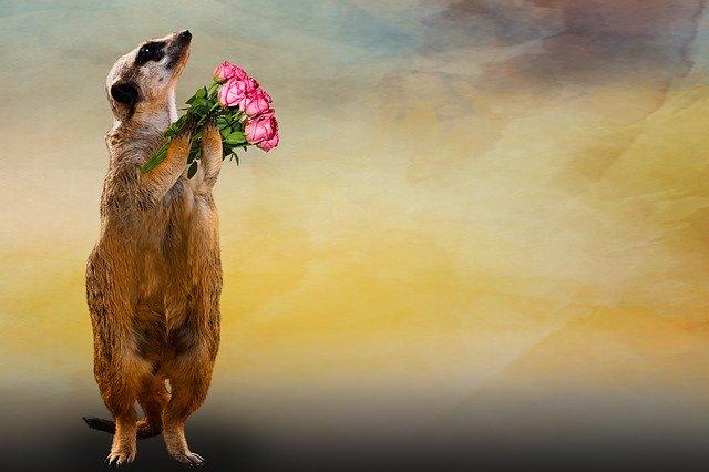 花束を持ち直立で感謝しているミーアキャット