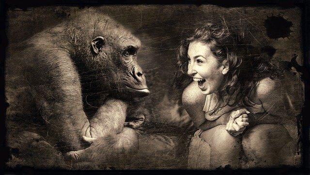 笑顔の女性とゴリラが対面