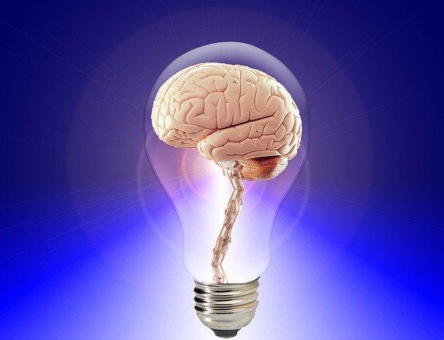 電球の中に入った脳のイラスト