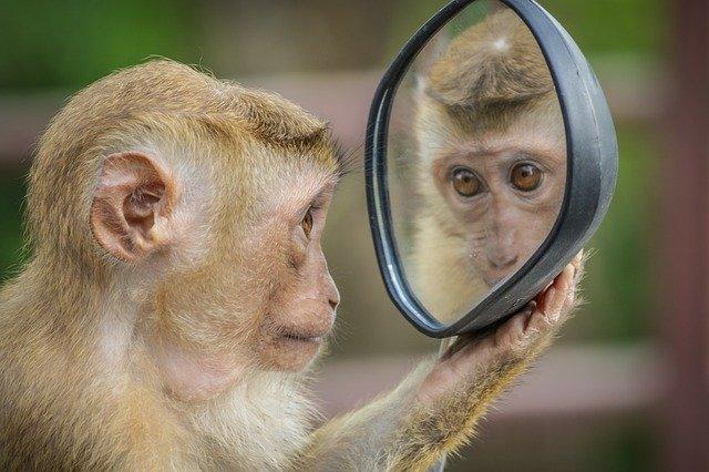 鏡で自分を見る猿
