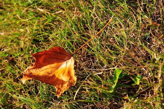 草原の中に枯れ葉が一枚