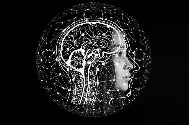 女性の顔と脳